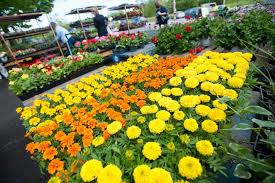 garden gift ideas for mother u0027s day balcony garden web