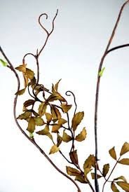 Curly Willow Branches Curly Willow Branch Artificial 50in