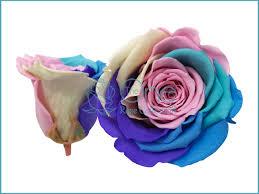 turquoise roses everlasting roses rainbow pastel fleur box