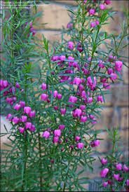 197 Best Native Garden Images On Pinterest Native Gardens