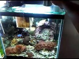 3 watt led aquarium lights reef tank cheap 4 3watt chip led bulb that has more brightness then