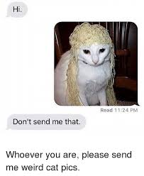 Weird Cat Meme - hi don t send me that read 1124 pm whoever you are please send me