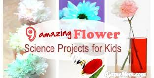 Life Cycle Of A Flowering Plant - 6 science youtube videos about life cycle of a flower