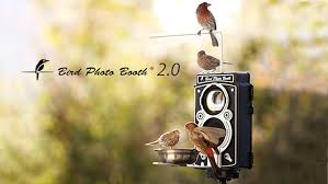 amazon com bird photo booth 2 0 4k motion activated wireless wi