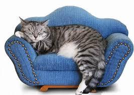 gatti divani divani usati relax anche nel prezzo con la qualit罌 mercatopoli