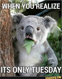 Tuesday Memes Funny - the five days of the workweek according to memes