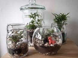 home decoration ornamental terrarium plants inside glass jar