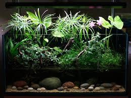 choosing basic tank shapes on aquarium designs aquascape