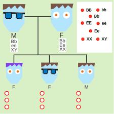 genetic variation ck 12 foundation