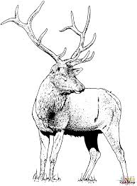 gorgeous elk deer coloring page free printable coloring pages