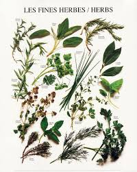 herbes cuisine les fines herbes chart all about herbs herbs