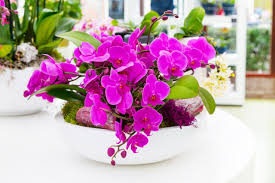 purple orchid flower orchid flower meaning and symbolism a really interesting read