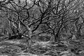 free images tree nature forest wilderness branch winter