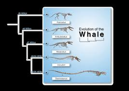 whale evolution data table answer key evidences for evolution part 2b the whales tale