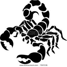 scorpion tattoo stock images royalty free images u0026 vectors