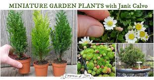 mini plants best plants for miniature gardens resource guide empress of dirt