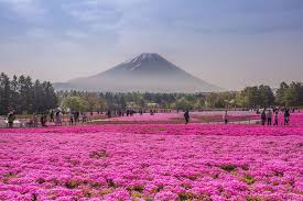 flower places 15 reasons why you should visit japan bored panda