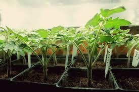 best grow lights for vegetables veggies fruits to grow indoors t5 grow light fixtures