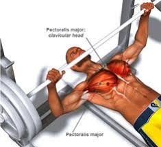 how to destroy the u0027lockout u0027 phase of the bench press