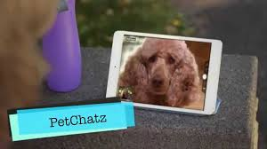 10 insanely clever pet gadgets you u0027ll want to have youtube