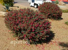 flowers for both christmas and valentine u0027s day ramblings from a