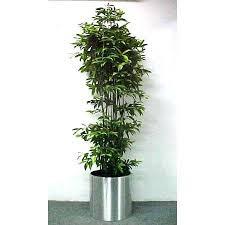 60 best indoor plants images on pinterest gardening house