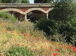 riverbanks botanical garden fromista to carrion de los condes u2013 walking the camino follow