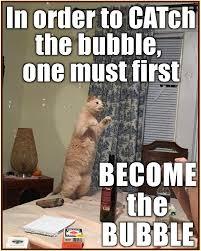 Cat Internet Meme - i can has cheezburger funny cat memes funny animals online