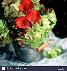 still life of floral arrangement of red calla lilies and green