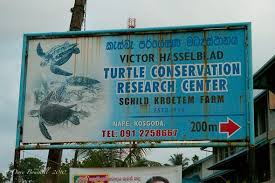 Blind Turtle Prices Saving Sea Turtles One Egg At A Time