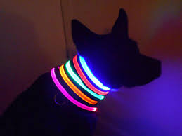light up collar amazon amazon lighted dog collars archives lighting idea for your home