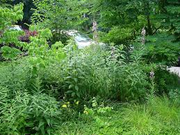 native planting garden design goes native the new perennialist