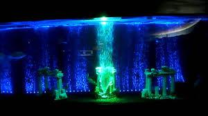 50 gallon aquarium