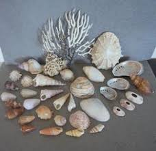 where to buy seashells buy sea shells grass from jeffreys bay cleaned