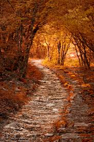 941 best tree lined path images on pinterest landscapes nature