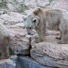 Tisch Family Zoological Gardens - tisch family zoological gardens reviews tripexpert