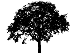 clipart tree silhouette 6