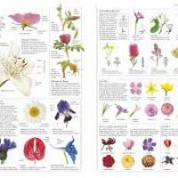 garden plants and flowers encyclopedia garden xcyyxh com