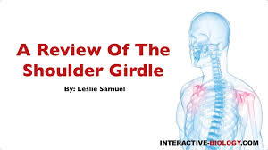 Anatomy Of The Shoulder Girdle 080 A Review Of The Shoulder Girdle Youtube
