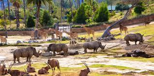San Diego Zoo Safari Park Map by San Diego Zoo Safari Park American Public Gardens Association