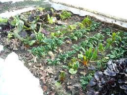 Fall Vegetable Garden Ideas Fall Vegetable Garden Ideas Autouslugi Club