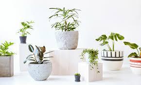demand for indoor plants in modern world