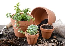 potting indoor plants your guide from lifestyle to successfully