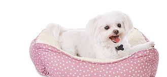 small pet beds pet beds dog cat small pet beds bedding blankets petco