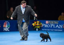 affenpinscher group seekonk dog to be featured in televised thanksgiving day dog show