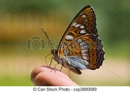 butterfly on finger stock photos and images 859 butterfly on