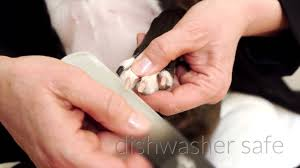 no more clipping file your dog u0027s nails instead u2013 top dog tips