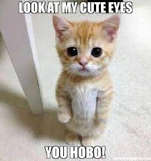 Hobo Memes - look at my cute eyes you hobo meme kitten timesheet 42572 page