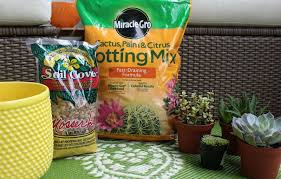 King Soopers Flowers - simple succulents 20 minute planter chance u0026 coincidence