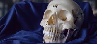 skulls unlimited leader in replica skulls skeletons